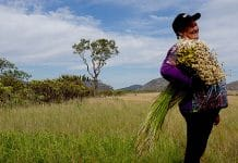 Farmers, who gatherer flowers in the Southern Espinhaço Mountain Range in Brazil, enhance biodiversity and preserve traditional knowledge.