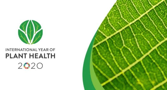 Cover image and logo of the international year of plant health 2020