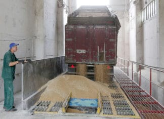 FAO cereal production